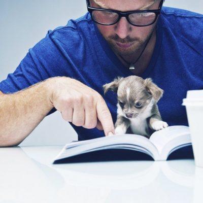 Dog reading - Sm
